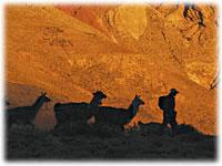 Caravana de llamas, trekking