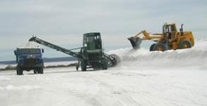 Carga de sal desde la parva hacia el sector de lavado
