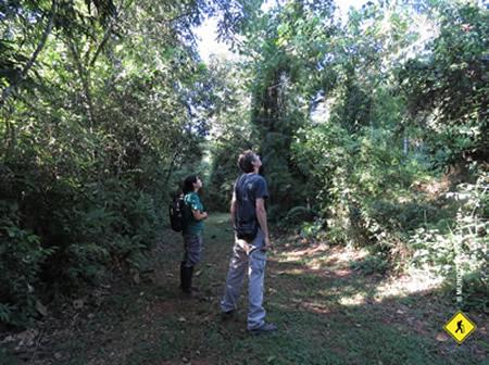 Surucuá Reserva & EcoLodge Safari fotográfico en Misiones Abdresito