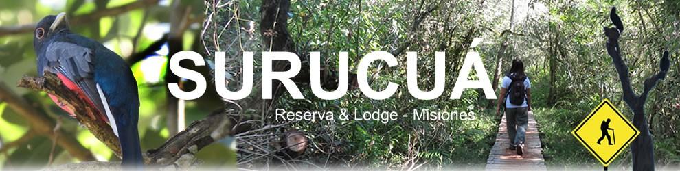 SAFARI FOTOGRÁFICO EN MISIONES Lodge Cataratas de iguazú Surucua es una de las mejores reservas privadas de biodiversidad en la selva del misionero Paraná